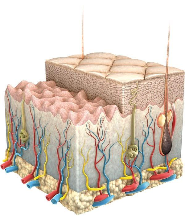 Старееща кожа - Бръчки - Eucerin