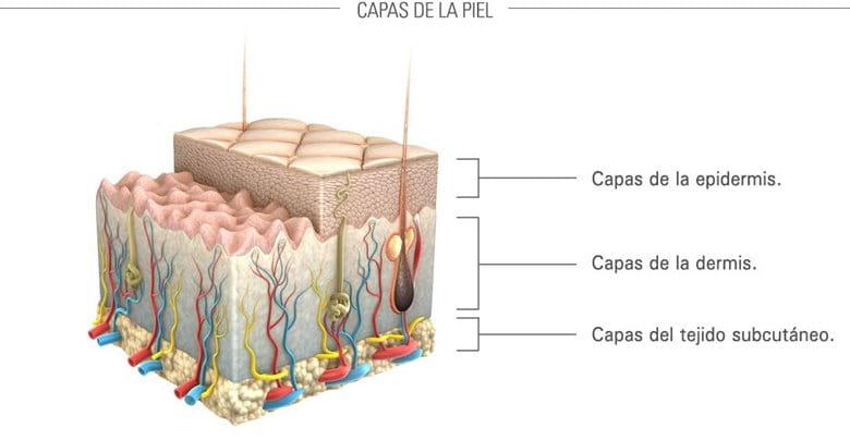 Presentación gráfica de la piel y sus capas.